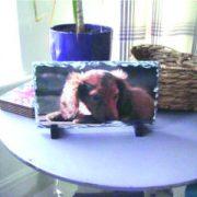 Bespoke rectangle shaped slate image dog pet image