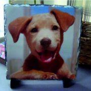 Bespoke square shaped slate image dog pet image
