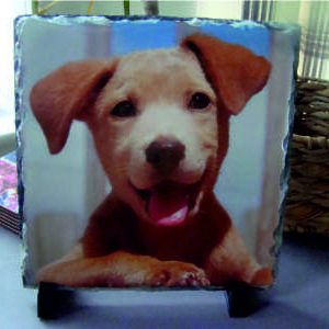 Bespoke square shaped slate image dog pet image