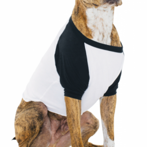 ¾ sleeve dog raglan t-shirt